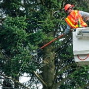 Commercial Tree Service Overland Park