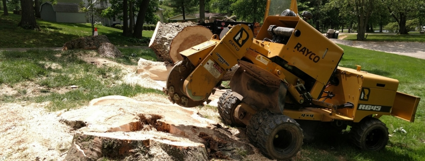 Stump Grinding and Removal Wichita